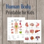 Free Human Body Printables for Kids