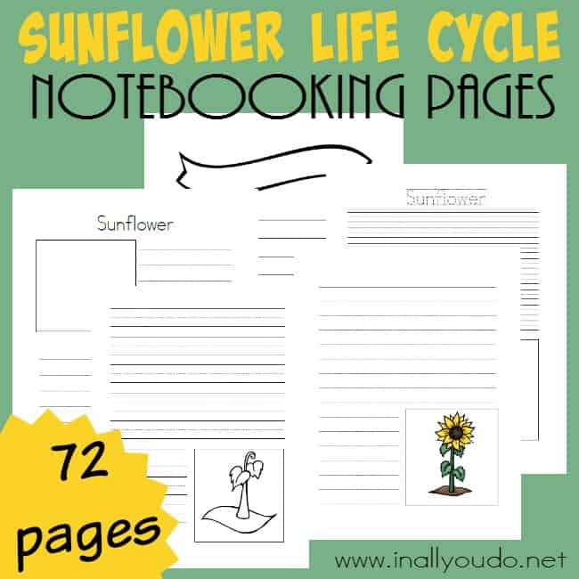 Sunflower Life Cycle Notebooking Pages on Latest Writing Prompts For Middle School