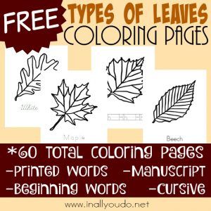 Types of Leaves Coloring Pages for Arbor Day