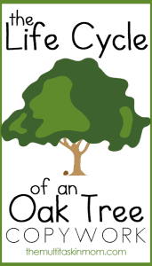 The Life Cycle of an Oak Tree Copywork