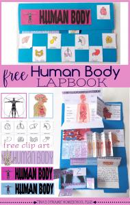 Free Human Body Lapbook and Unit Study