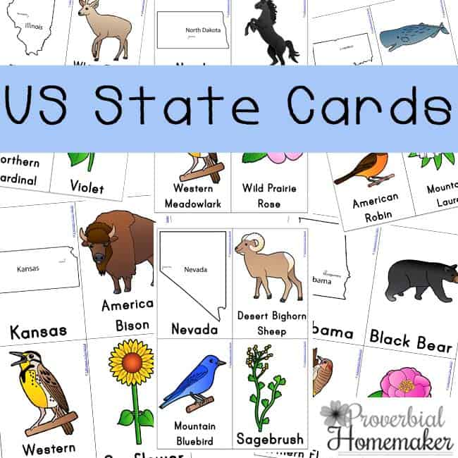 These are sure to make learning the name of all the states so much easier.