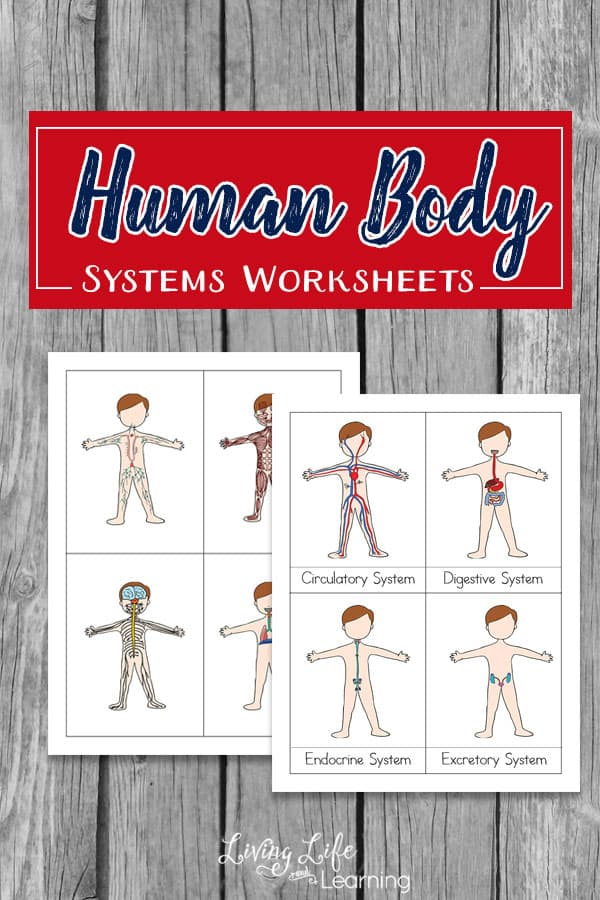 Human Body Systems Printables