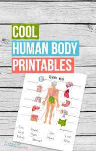 Human Body Printable Worksheets