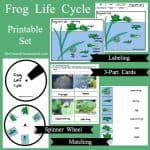 Fun Parts of a Frog and Life Cycle Hands-on & Printable Activities