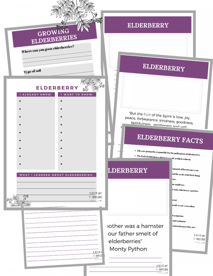 Elderberry Learning Printables