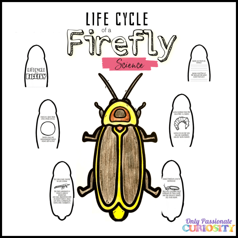 Lifecycle of a Firefly Mini-Unit