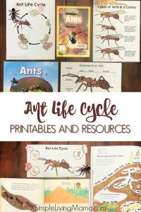 Ant Life Cycle Pritnables
