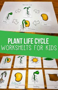 Plant Life Cycle Worksheets
